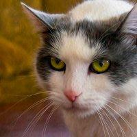 Кошка Пиния :: Leha F