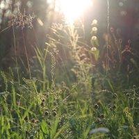 солнечная трава :: Лиза Игошева