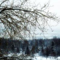Скоро зима :: Сергей Рыбачёнок