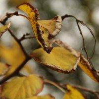 Осень :: Дарья Павлова