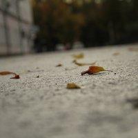 листья на асфальте :: Дарья Павлова