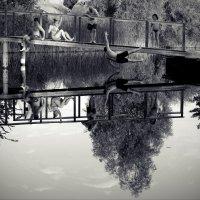 гладь старинного пруда :: Айдимир .