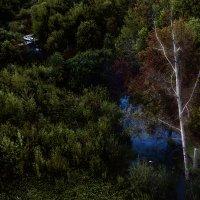 Белое дерево :: Виталий Волкоморов