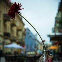 Цветок Вильнюса :: Maria Bushko
