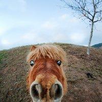 А ты яблоки принес? :: Sergej Lopatin