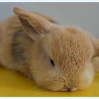 bunny rabbit :: Natalya секрет