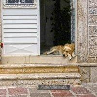 собачья жизнь :: Polina B Visual artist