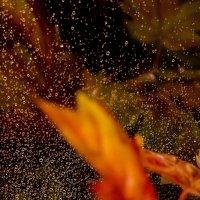осенний дождь :: Nataliia Bido