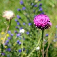Степные цветы. :: Геннадий Оробей