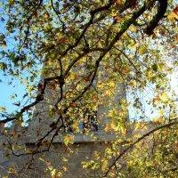 В Греции тоже скоро осень... :: Анастасия Горяинова