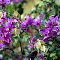 Цветы... :: Анастасия Горяинова