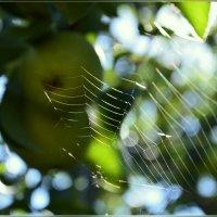 В серебряной паутине :: galina tihonova