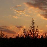 Взгляд букашки на большое высокое небо...:) :: Альбина Хамидова