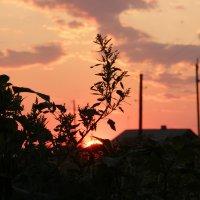 На фоне заката. :: Альбина Хамидова