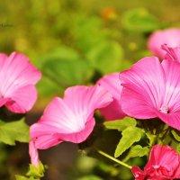 Цветочки :: Juliya Fokina