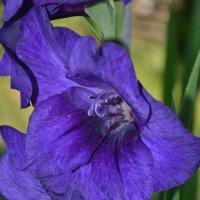 Цветы :: Juliya Fokina