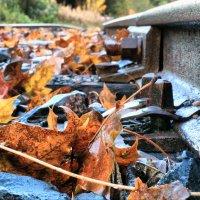 Осень :: Андрей Григорьев