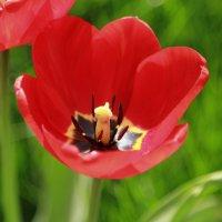 Воспоминание о весне))) :: ЕЛЕНА W