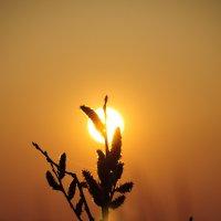 Sun flower :: Никита Балуев