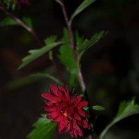 цветок :: Marina Marik