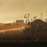 Закат в Сибирской деревне :: Полина Кузнецова