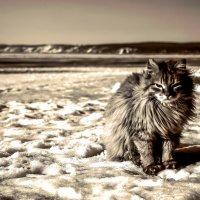 Зимний кот... :: Евгений Малютин