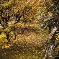 Осень :: Ser Gun ...
