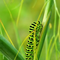Скоро буду бабочкой :: Виталий Леонкин