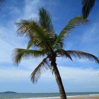 Море. Пальмы :: Виталий Леонкин