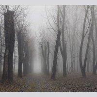 туман :: Елена Ерошевич