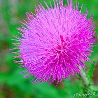Колючка цветет :: &Любовь& &~&