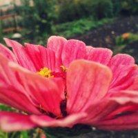 Flower#1 :: Алёна Докшина