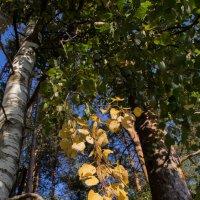 в лесу.... :: Любовь Анищенко