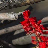 Осеннии цветы. :: Сергей Давыденко