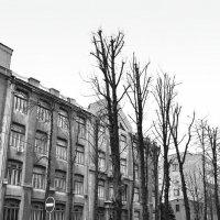 Улица :: Ольга Мальцева