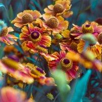 Мамин сад :: Алена Афанасьева