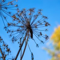 Осенние краски. :: Лариса Сафонова
