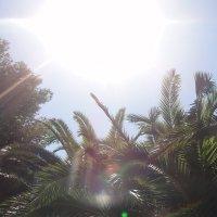 Пальмы, солнце, счастье... :: Рина Мызникова