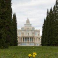 Цветы осени :: Евгений Демидович