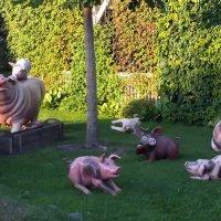 Свинки :: vadim