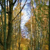 Золотая осень. :: Павел Тюпа