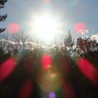 Солнце над лесом :: Владимир Сопченко