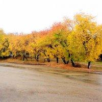 Зауральская  осень :: A. SMIRNOV