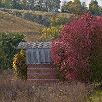 Дачная осень :: Yuri Silin
