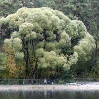 У озера в зоопарке :: Аркадий Медников