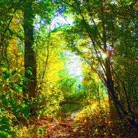 Осень...Осень!.. :: Александр Швецов
