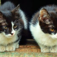 Два брата :: Владимир Васильев