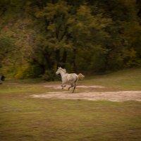 лошадь :: Мария Немцова