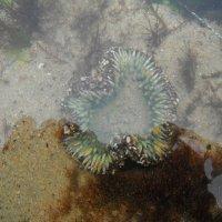 подводное сердце :: нина полянская