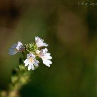 Неизвестный цветок) :: Борис Устюжанин